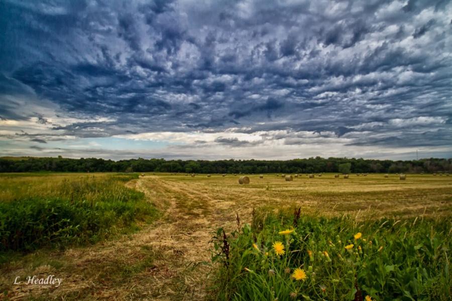 Nebraska Hay Field