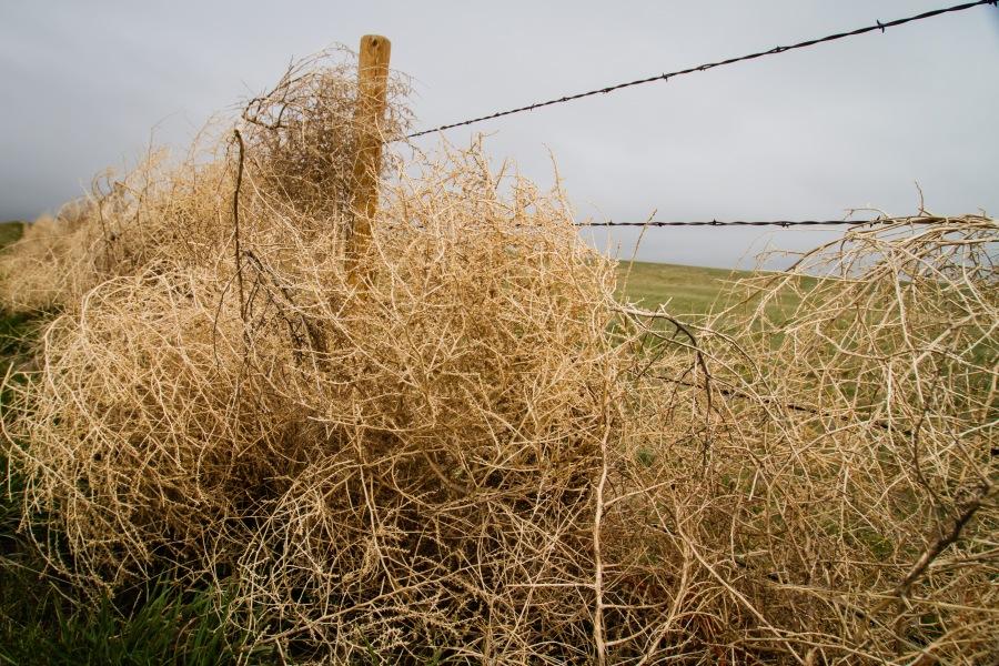tumble weeds