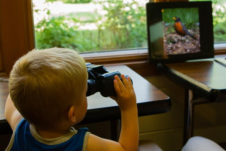 Young Bird Watcher