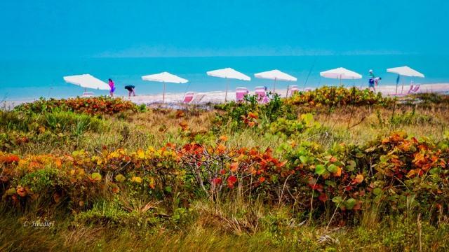 Umbrellas - Sanibel Island