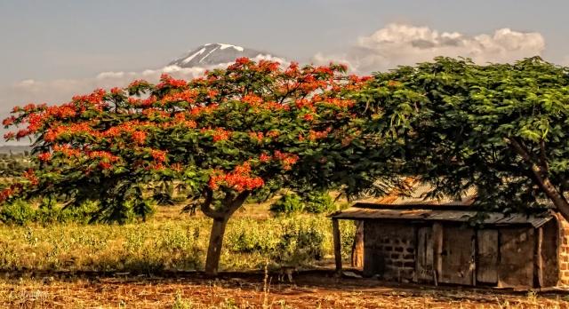 Mt. Kilamanjaro