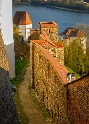 castle cat - Passau, Austria